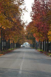 via della Vittoria in autunno